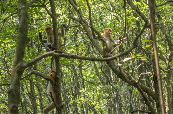 Destinasi Wisata Wajib Dikunjungi di Tarakan