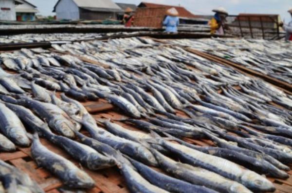 Produksi Ikan Laut Kaltara Mencapai 35 Ton